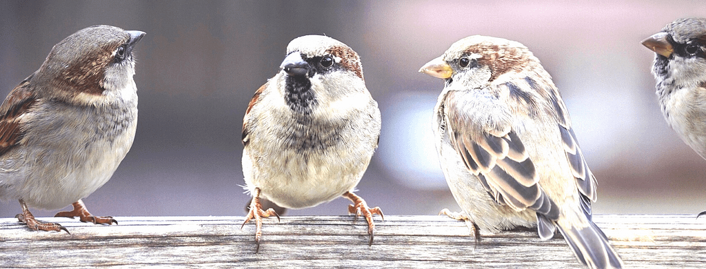 sparrows-edited
